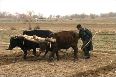 afghanistan agri